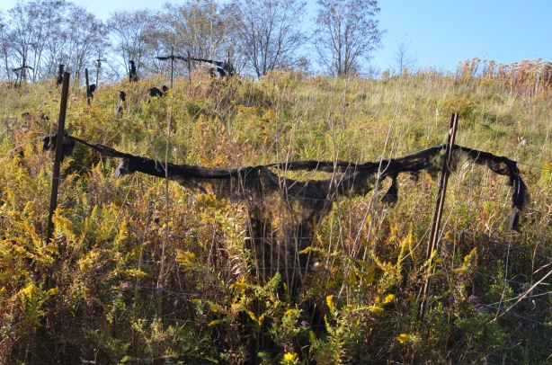remnants of a black cloth fence that has rotted, outdoors, hanging off of posts, vacant, land, weedy,