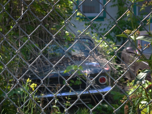an old car in an overgrown backyard, behind chainlink fence