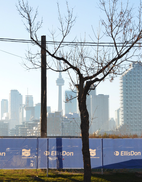 a tree with crooked branches in front of an Ellis Don blue fence around Port Lands construction site, CN Tower and Toronto skyline in the distance