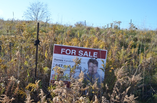 a for sale sign half hidden in the overgrown weeds