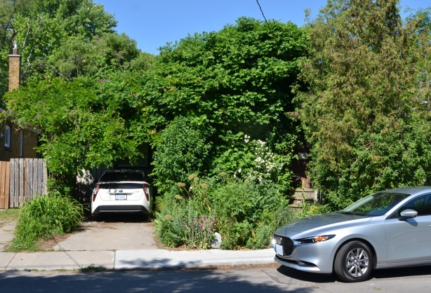 a front yard so overgrown with trees and greenery that you can hardly see the car in the driveway. The house is entirely hidden