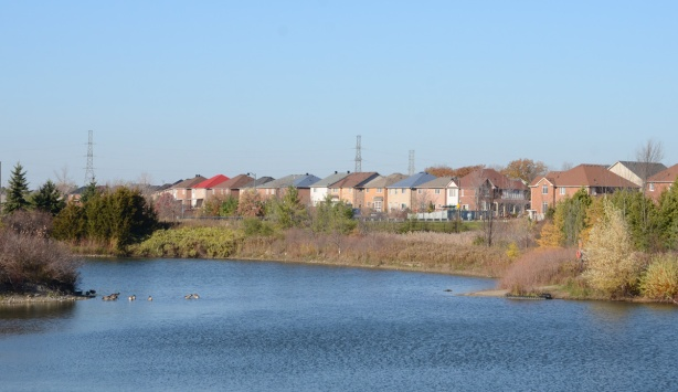 pond with Canada geese, backs of houses on the far shore,