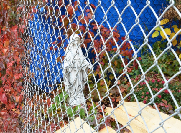 at the back of backyard in a small garden, behind chainlink fence, a white small statue of mary holding rosary beads