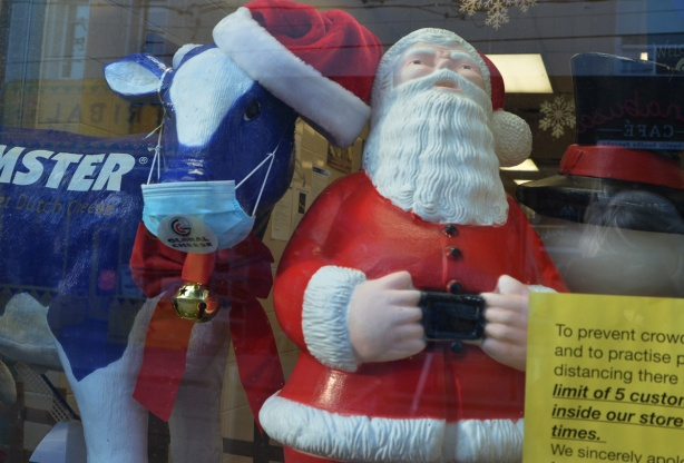 in a store window, a cow statue wearing a mask, and a fat Santa Claus
