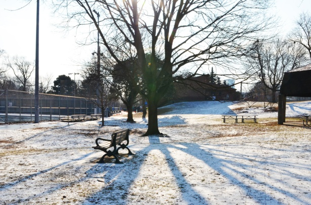 bench in park, snow on ground, large tree, lots of long shadows,