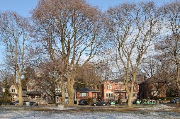 stret of houses and large trees across from Rennie Park, single family homes, residential area, large trees, winter, no leaves, some snow on the ground.