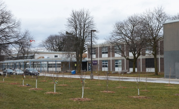front of Don Mills Secondary School, many new trees have been planted in front of the school