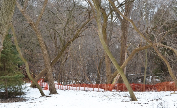path in woods in winter, with orange snow fence lining the walkway