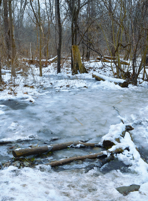 ice on the path, beside creek, in woods,