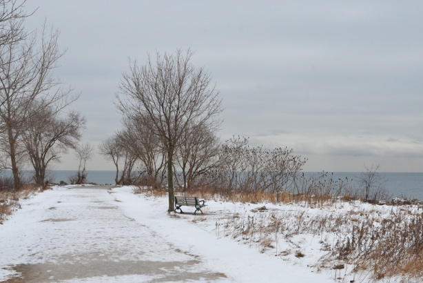 winter scene, beside Lake Ontario, bench in park facing the water, some bare trees around it