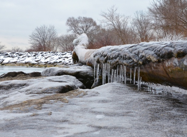 ice and icicles on a fallen log on the rocks beside Lake Ontario, some snow and bare trees in the background
