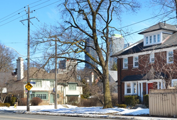 houses in winter, large tree, with tall condos in the background.