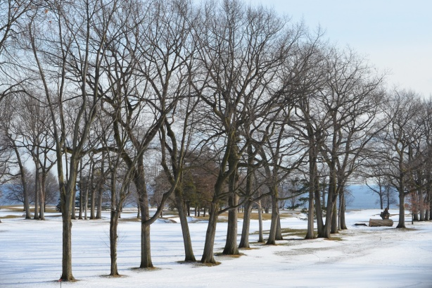 trees, in winter time, with snow on the ground, with Lake Ontario in the distance, Scarboruogh Hunt Club grounds