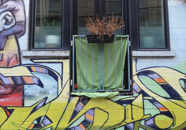window and window box in a building with street art on the walls, dead plants in the planter