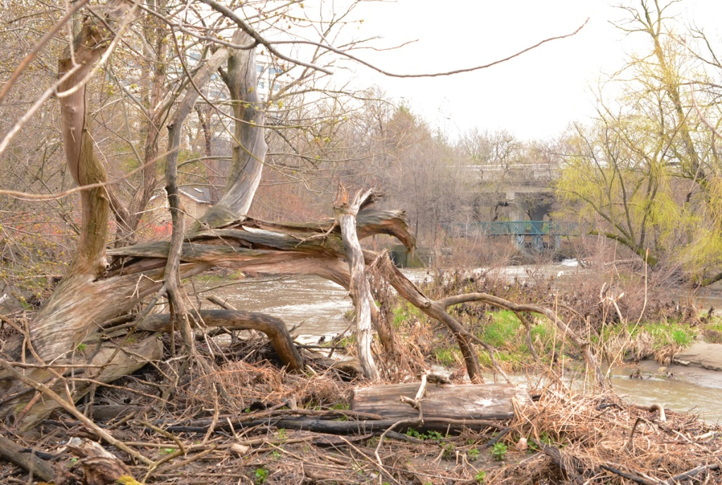 a large piece of driftwood from the roots of a large tree in the foreground with a river, trees, and an apartment building in the background