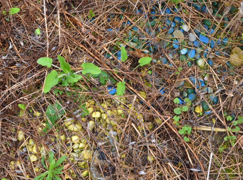 many small stones painted blue and some painted yellow, on the ground, with weeds starting to grow up among them