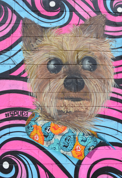 part of a mural, a furry small dog's face in shades of brown with black nose and eyes, blue and orange spudbomb stencils under the dog, also words say #spud1.  Pink and blue swirls for background