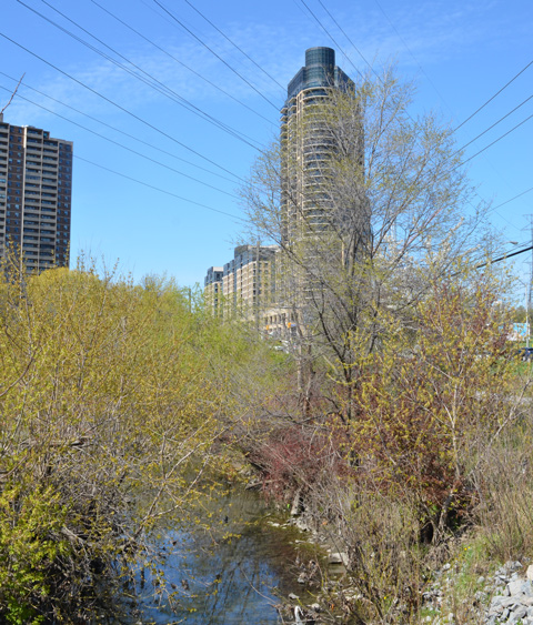 Emery Creek and shrubs in the foreground, new condos and older apartment buildings in the background