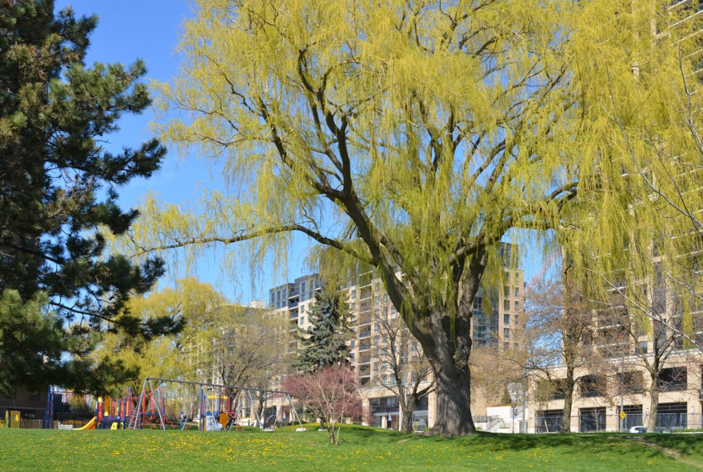a large willow tree beside a playground and three apartment buildings
