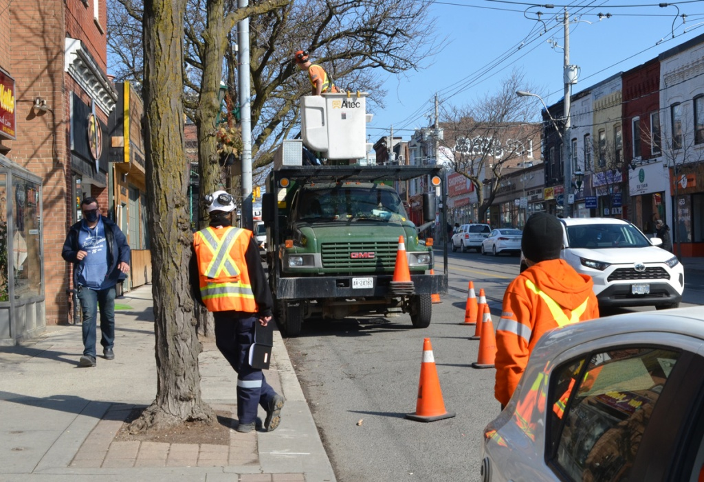 workmen pruning trees on a city street, one man is leaning against a tree, a pedestrian in navy blue jacket and mask is walking past on the sidewalk, stores along Parliament street