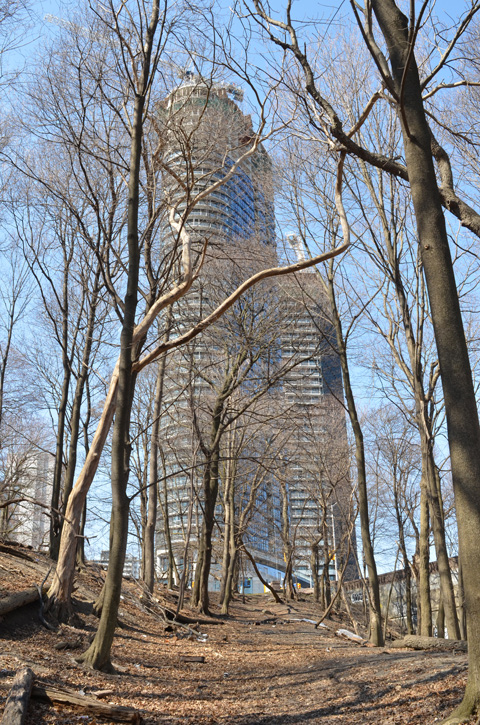 looking up hill through the trees to a new condo tower being built at Bloor and Parliament