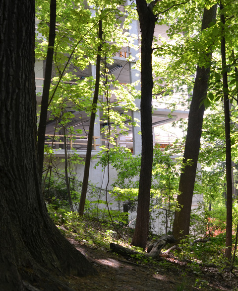 new condo being built at the edge of a park, seen through the trees