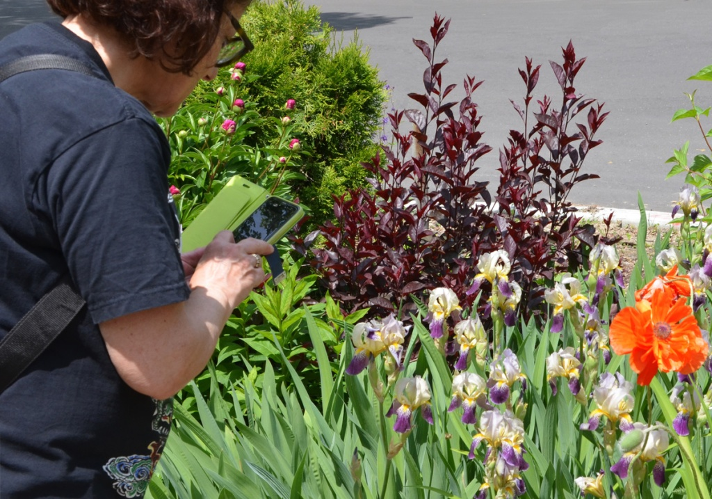 a woman is using her phone to take pictures of irises, peonies, and other flowers and plants