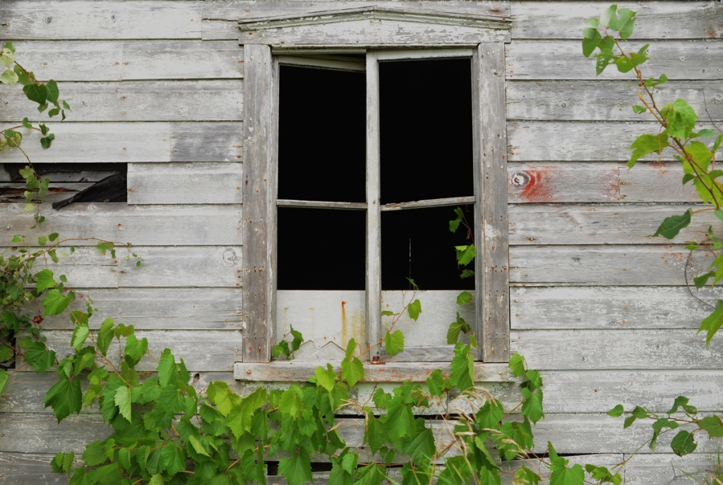 side view of old wood garage with window, no glass, wild grape plant