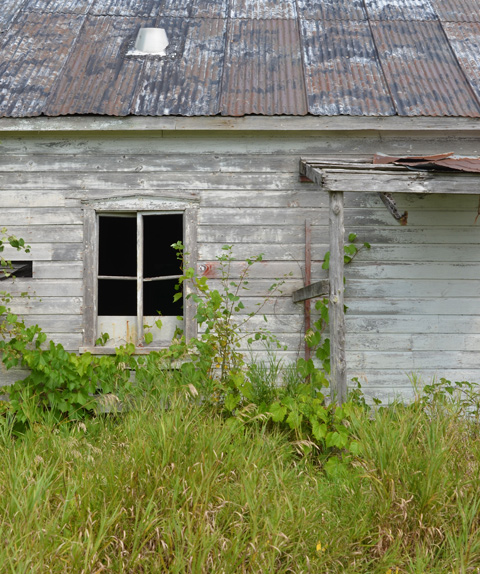 Part of side of wood structure with corrugated metal roof. one window with no glass, tall grass in front,