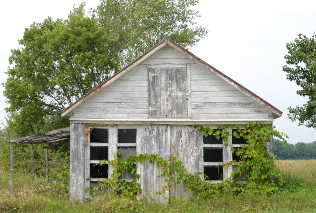 small wood structure with large windows and a lot of wild grape plant on the front.  Garage size, tall grass around it