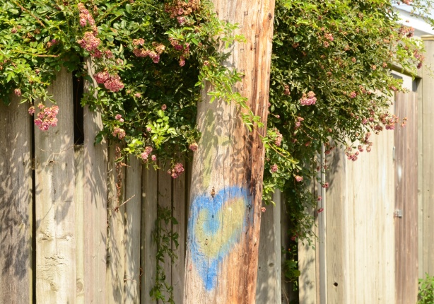 blue spray paint heart on a wood utility pole in an alley, by a wooden fence with a flowering shrub