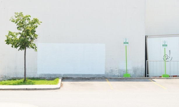 small tree beside parking lot with white wall behind