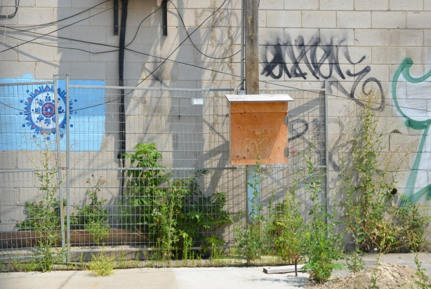 small wood box mounted on chainlink fence around vacant lot , concrete wall behind it