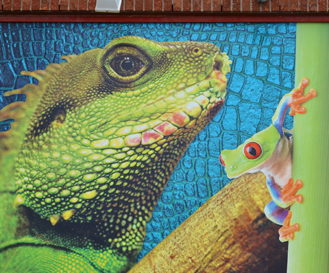 a picture of a green frog and a green reptile, large, on the outside of an aquarium shop