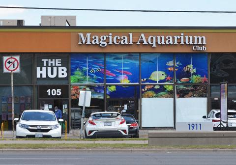 Magical Aquarium Club building in Scarborough